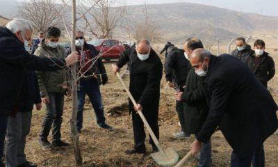 Yahyalı Belediyesi ağaçlandırma çalışmalarına devam ediyor