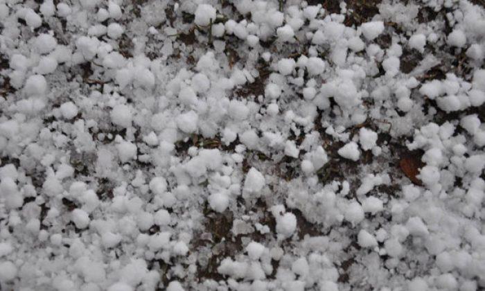 Kar Elma Üreticilerini Sevindirdi