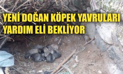 Yeni doğan köpek yavruları yardım eli bekliyor